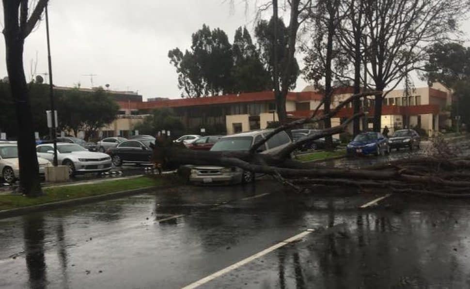 A downed tree landed on the hood of a car at Pacific Avenue and 28th Street. Photo by Nathan Brava-Partain.