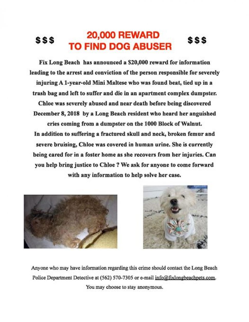 poster asking for information leading to the arrest of a dog abuser. Two photos of the dog are included. The first is a gray matted dog lying on her side; the second is the same dog, white and fluffy, after good care.