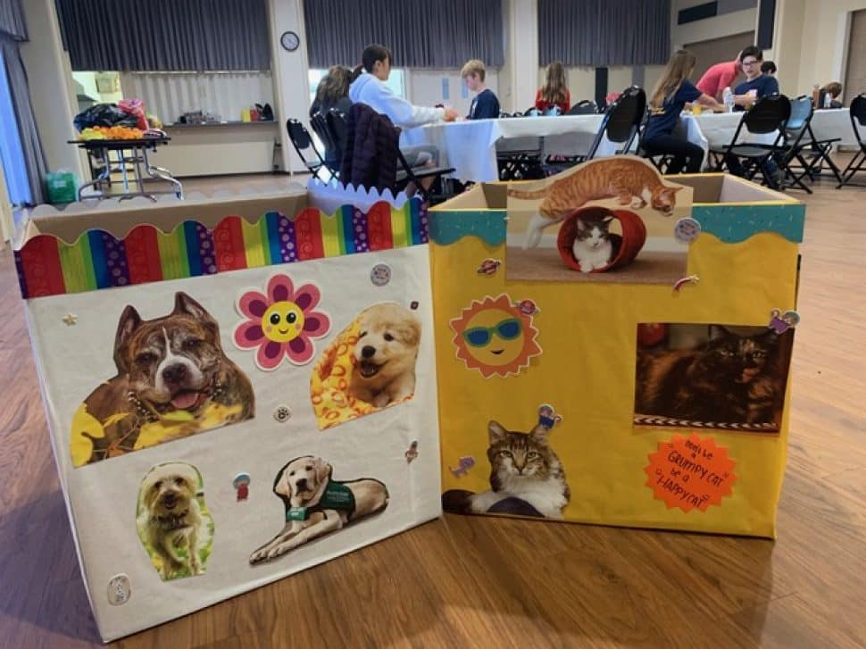 A large white box and a large yellow box decorated with photos and cutouts of dogs and cats, decorated further with flowers and suns.
