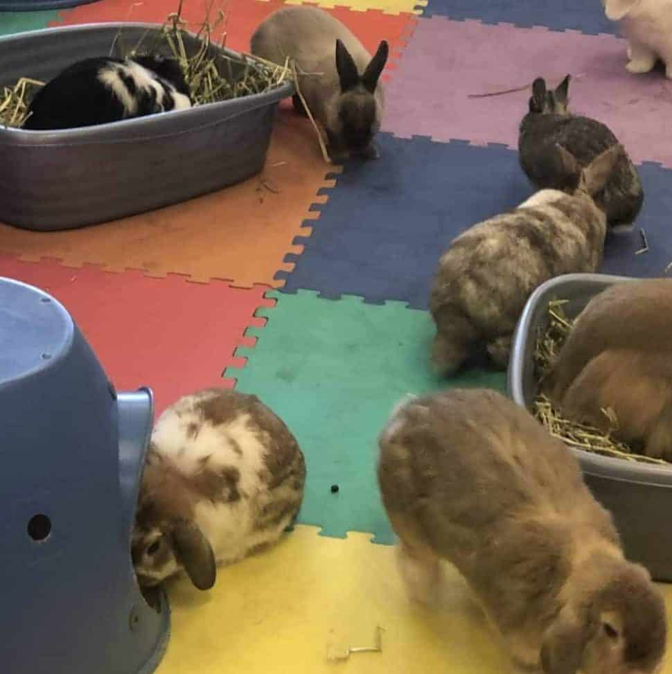 several rabbits of different colors frolic on a floor covering of bright red, yellow, blue and green squares.