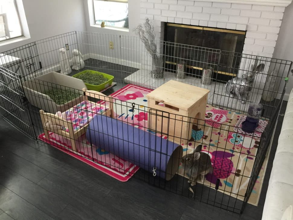 A caged-off area with a colorful rug and a brown box for the bunnies to crawl into.