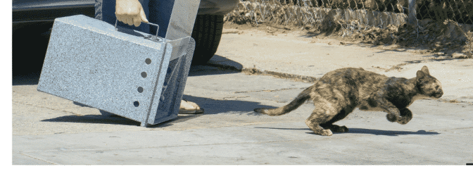 A tortoise-shell cat races from a blue-plastic carrier from which she's been released.