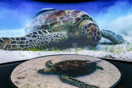 Two turtles on a large, curved, movie screen at the Honda Pacific Visions Theatre
