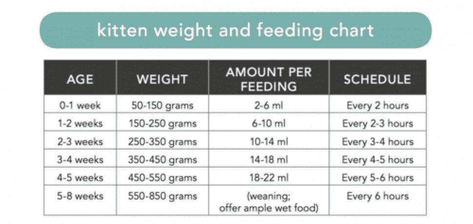 Chart for determining weight, feeding amount, feeding interval of newborn kittens.