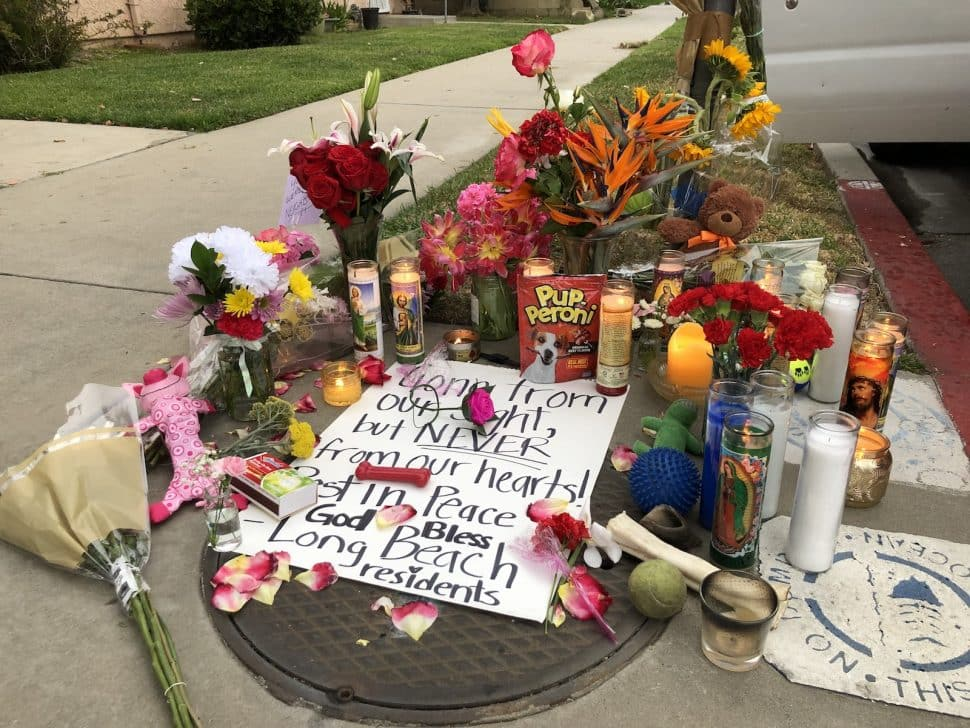 A memorial is crowded with dog toys, treats, flowers and candles. Photo by Jeremiah Dobruck.